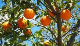 Rząd nakłada podatek na polskie owoce