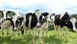 Inwestycje czempiona polskiego mleczarstwa